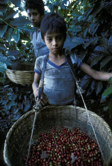 Child in el salvador coffee plantation